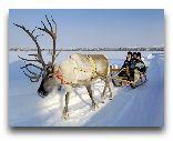 Финляндия: Катание на олених упряжках