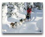 Финляндия: Собачьи упряжки