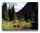 Киргизия: горный лес