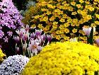 Швеция: Ботанический сад в Гетеборге