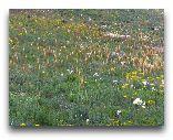 Таджикистан: Цветы в горах весной
