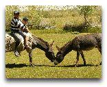 Таджикистан: Местные животные