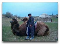 юртовый лагерь Aydar yurt camp: Верблюд