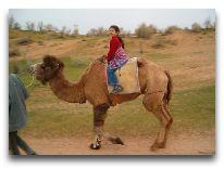 юртовый лагерь Aydar yurt camp: Катание на верблюдах