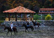 отель Lopota Resort: Прогулка на лошадях