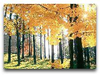 отель Парк отдыха и развлечений Tony Resort: Осень