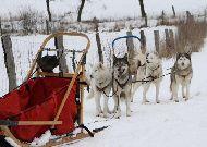 отель Zamek Ryn: Развлечения -езда на собаках