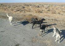 Узбекистан: общая информация, фото: Животные на реке