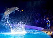 Зоо и сафари парк Kolmården: Дельфинарий