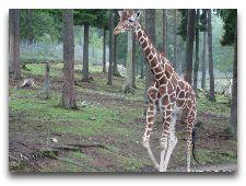 Зоо и сафари парк Kolmården: Жираф