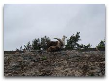 Зоо и сафари парк Kolmården: Горные красавцы