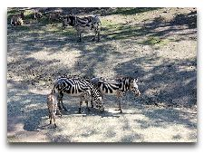 Зоо и сафари парк Kolmården: Зебры