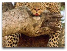 Зоо и сафари парк Kolmården: Леопард