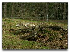Зоо и сафари парк Kolmården: Ох! уморился