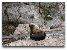 Зоо и сафари парк Kolmården: Тюлень