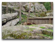 Зоо и сафари парк Kolmården: У медведей тихий час
