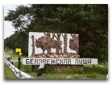 Беловежская пуща: Беловежская пуща