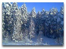 Беловежская пуща: Зимняя Пуща