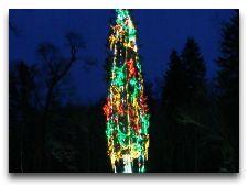 Беловежская пуща: Новогодняя ель