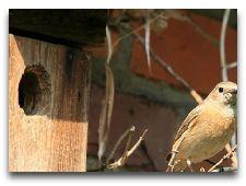 Достопримечательности города: Cтанция птиц