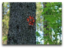 Достопримечательности полуострова Виймси: Ориентиры в лесу