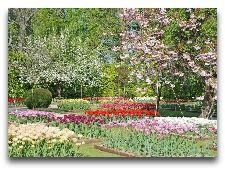 Замок Эгесков: Тюльпаны
