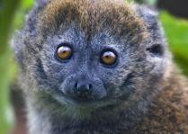 Зоопарк Гивскуд: Бандро