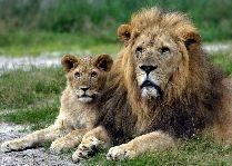 Зоопарк Гивскуд: Мы ребята хорошие