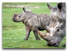 Зоопарк Гивскуд: Носороги