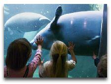 Город Оденсе: Зоопарк