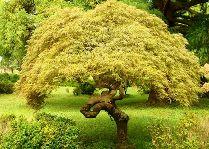 Батуми Ботанический сад