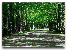 Парк Тойла-Ору: Липовая аллея