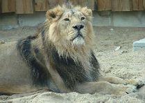 Таллиннский зоопарк