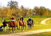 Активный отдых в Сигулде: Конные прогулки