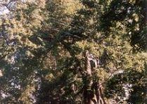 Парк в поместье Нурмижи