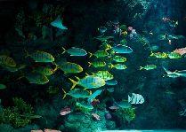 Парк Тиволи: Мир рыб