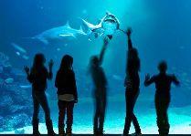 Научный центр Universeum: Акулы