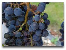 Вина региона. Винодельня семьи Яворек