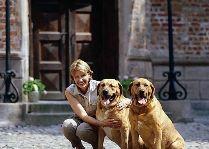 Замок Брохолм: Брохольмер - порода датских собак