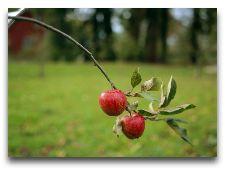 Замок Брохолм: яблоки замка