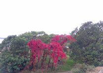 Замок Чулёхольм: Парк осенью