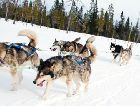 Горнолыжный курорт Клаппен: Катание на собачьих упряжках