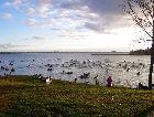 Алуксне: Берег озера в Алуксне.