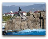 Батуми: Дельфинарий