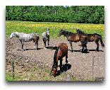 Замок Бирини: лошади