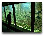 Остров Борнхольм: Аквариум на острове