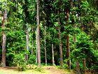 Боржоми: Боржомский лес