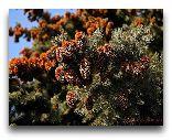 Боржоми: Деревья в Парке