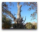 Бухара: Осенняя Бухара