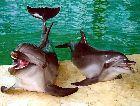 Кольморден: Дельфинарий